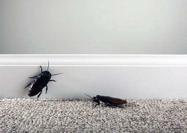 意味 の ゴキブリ 夢 の